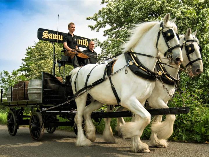 Delivery: una coppia di Cavalli Shire consegna la birra in carrozza