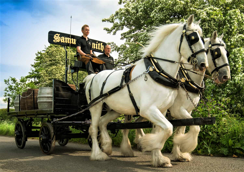 Delivery: una coppia di Cavalli Shire consegna la birra.